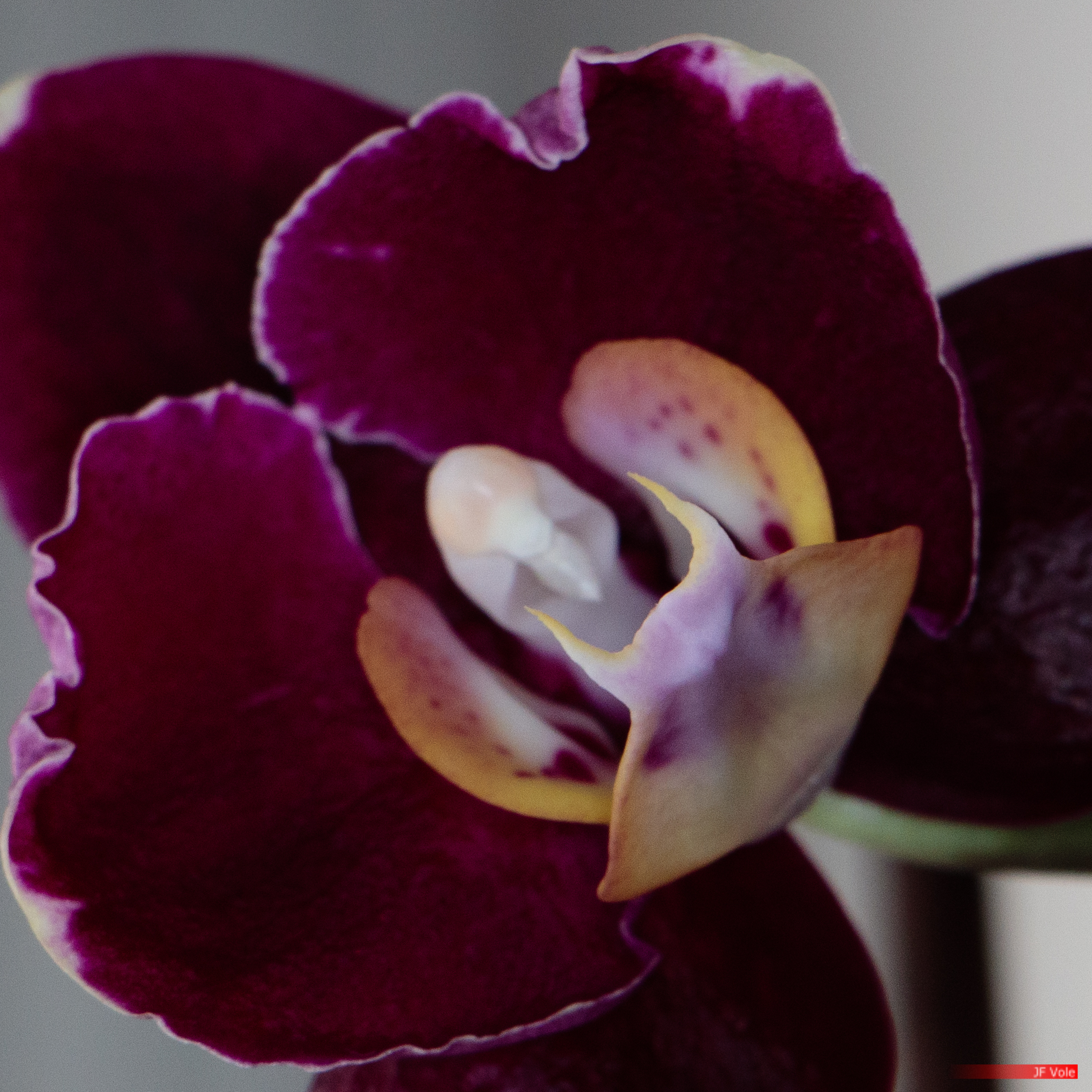 Flash annulaire - 1/15 s - f/8.0 - ISO 400